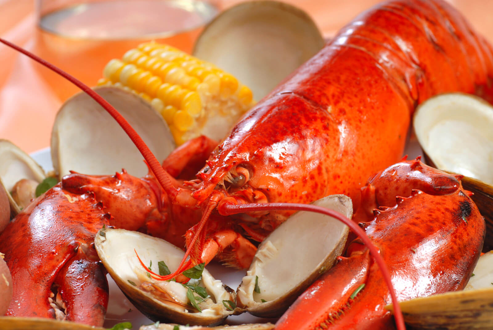 Our 2nd Annual Aspen Lobster Bake – July 27th, 2019